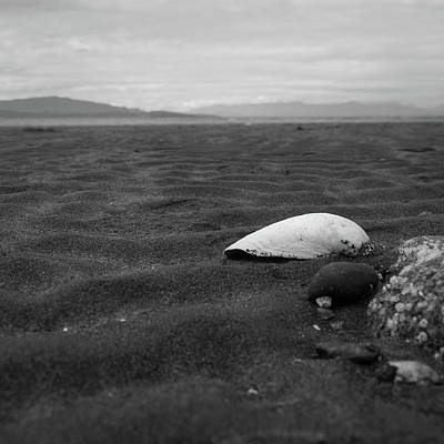 Photograph - Shell And Sand by Trance Blackman