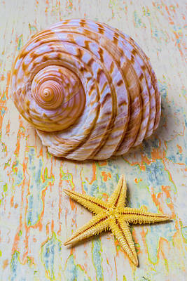 Nature Study Photograph - Shell And Starfish by Garry Gay