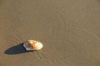 Beach Shell Sand Sea Ocean Photograph - Shell And Waves Part 1 by Alasdair Turner