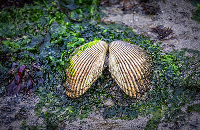 Photograph - Shell Art by Bill Posner