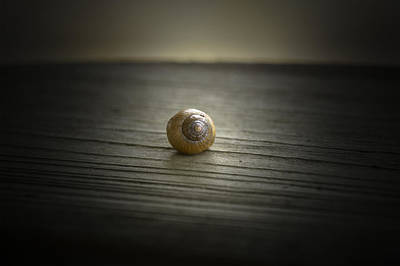 Photograph - Shell by Printed Pixels