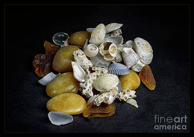 Photograph - Shell Collection by Joann Long
