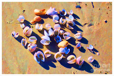 Photograph - Shell Collection by Roberta Byram