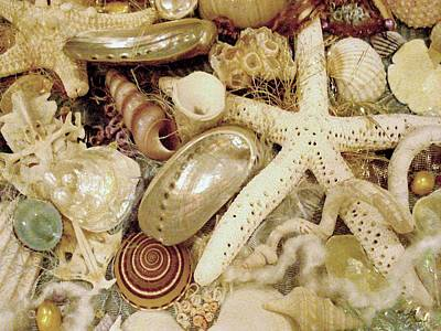 Art Print featuring the photograph Shell Collection by Rosalie Scanlon