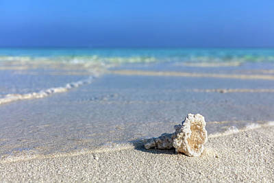 Clouds Photograph - Shell, Coral Reef On Sandy Tropical Beach In Maldives by Michal Bednarek