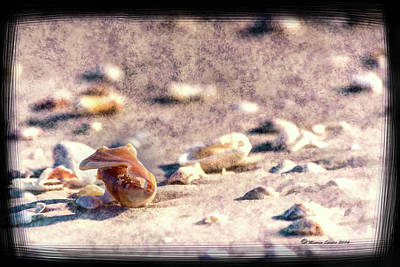 Photograph - Shell Delight by Marvin Spates