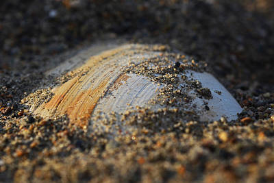 Digital Art - Shell Embedded In The Sand by Toby McGuire