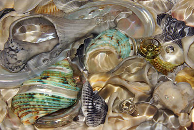Photograph - Shell Fluidity by Leda Robertson