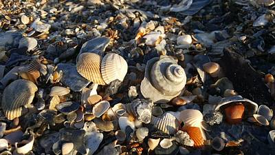Photograph - Shell Game by Louis Jones