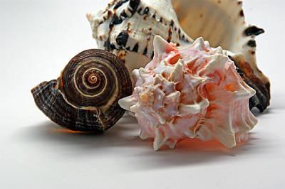 Photograph - Shell Grouping by Lynda Lehmann