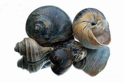 Photograph - Shell Grouping by Mary Haber