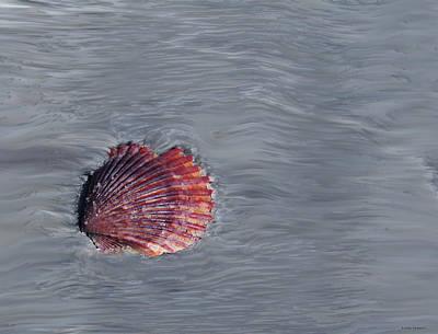 Seashell Digital Art Photograph - Shell Imprint by Linda Sannuti