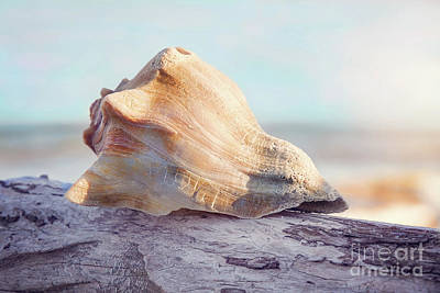 Photograph - Shell In The Golden Sun by Sharon McConnell