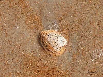 Shell Art Print by Judy  Waller