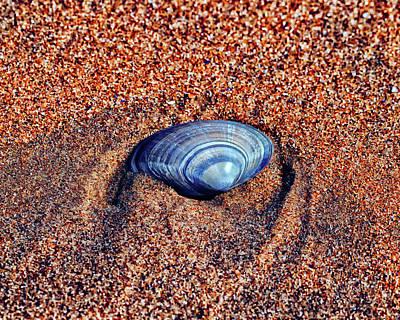 Photograph - Shell by Makk Black