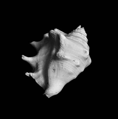 Krauzyk Photograph - Shell No. 2 by Henry Krauzyk