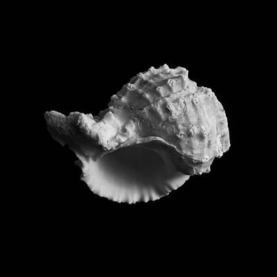 Krauzyk Photograph - Shell No.3 by Henry Krauzyk