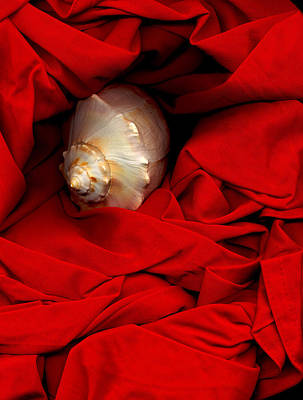 Photograph - Shell On Satin by Lynda Lehmann