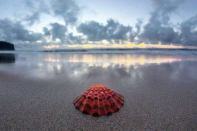 Photograph - Shell Rise by Sean Davey