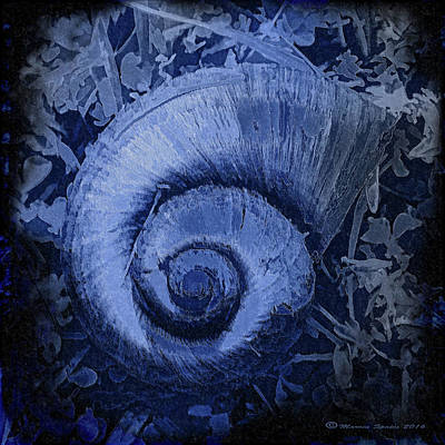 Shell Series 3 Art Print by Marvin Spates