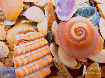 Photograph - Shell Shocked by Laura Brightwood