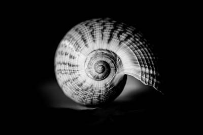 Photograph - Shell Study No. 001 by Pictorial Decor