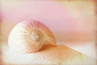 Photograph - Shell Study No. 04 by Pictorial Decor