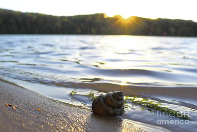 Photograph - Shell Sunset by Erick Schmidt