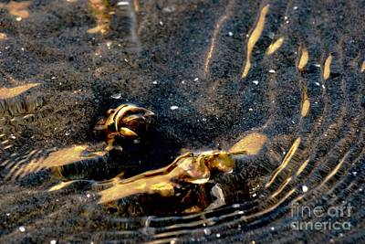 Photograph - Shellfish In Golden Tides  by Margie Avellino