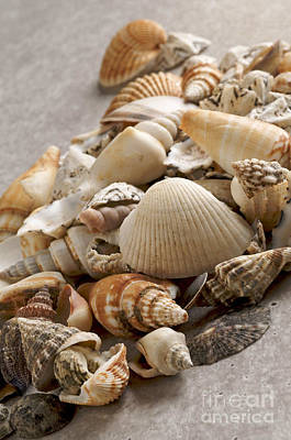 Large Group Of Objects Photograph - Shellfish Shells by Bernard Jaubert