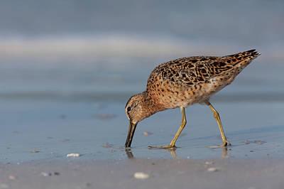 Photograph - Shelling On The Beach by David Watkins