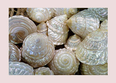 Photograph - Shells - 4 by Carla Parris