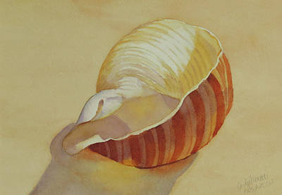 Painting - Shells 4 by Judy Mercer