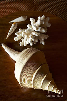 Photograph - Shells And Coral by Kyle Rothenborg - Printscapes