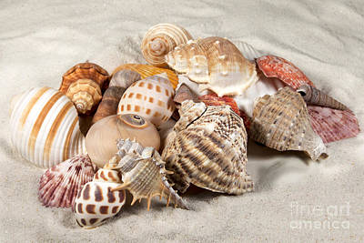 Photograph - Shells And Sand by Karin Pinkham