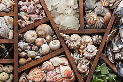 Treasure Box Photograph - Shells And Sea Glass by Art Block Collections