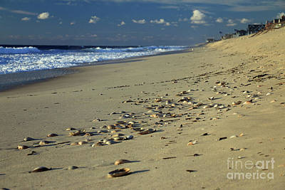 Photograph - Shells And Waves by Mary Haber