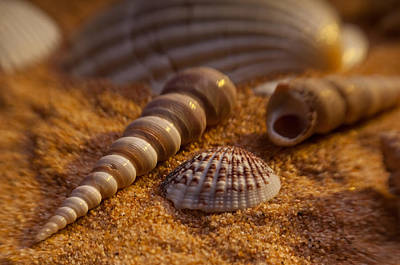 Shells Art Print by Anthony Towers