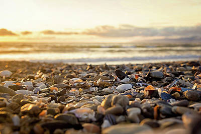 Photograph - Shells At Sunset by April Reppucci