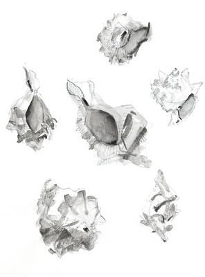 Mallorca Drawing - Shells by Chris N Rohrbach