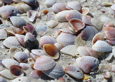 Photograph - Shells Close Up by Carol Groenen