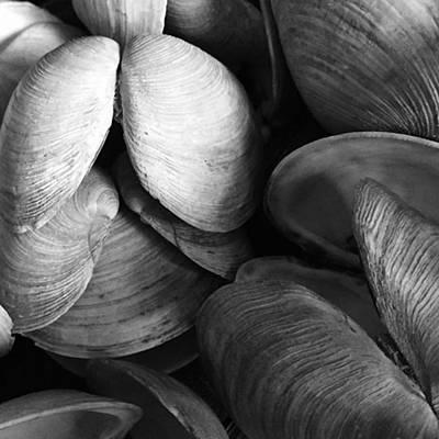 Photograph - Shells #decor #wallart #photowall #art by Adam Graser