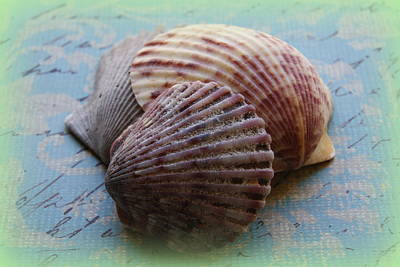 Photograph - Shells by Diane Reed