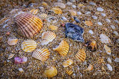 Shells Fragments Art Print by Carlos Caetano