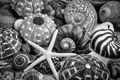Photograph - Shells From The Beach Black And White by Garry Gay