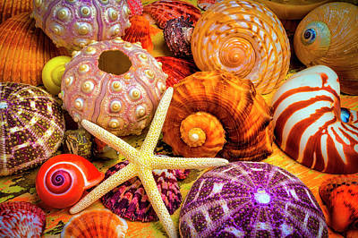 Photograph - Shells From The Beach by Garry Gay