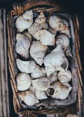 Shells Art Print by Happy Home Artistry