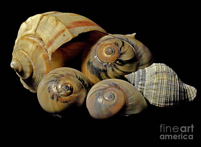 Photograph - Shells In Color by Ken Frischkorn