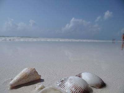 Education By Traveling Photograph - Shells In The Sand 1 by Exploramum Exploramum