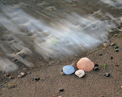 Photograph - Shells In The Sand by Angela Murdock